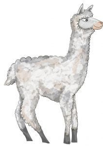Animal Illustrator - Alpaca