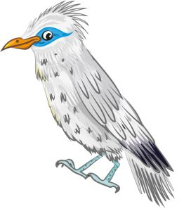 Animal Illustrator - Bali Starling