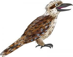 Animal Illustrator - Laughing Kookaburra