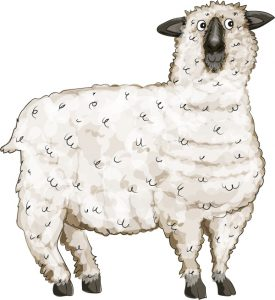 Animal Illustrator - Oxford Down Sheep