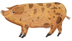 Animal Illustrator - Oxford Sandy Black Pig