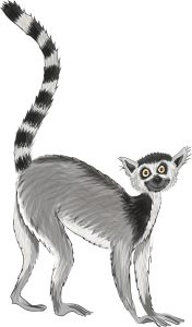 Animal Illustrator - Ring Tailed Lemur