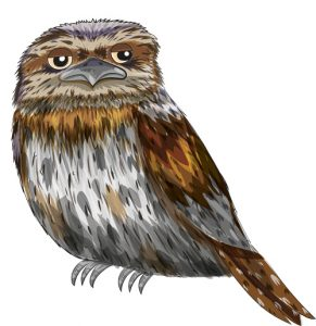 Animal Illustrator - Tawny Frogmouth Owl